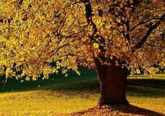描写秋天的句子大全要短的:秋天