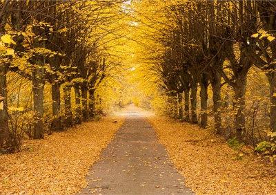 秋天的短句子