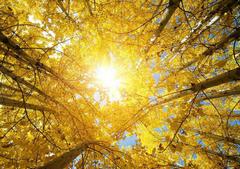 秋天的短句子:秋天到了,天空一