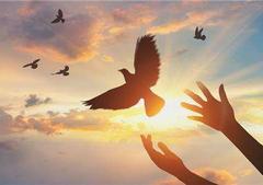 希望世界和平的句子【精选10句】