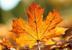 描写秋天落叶的句子:枯黄的落叶
