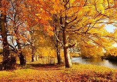 描写秋天的句子大全:秋思秋念秋
