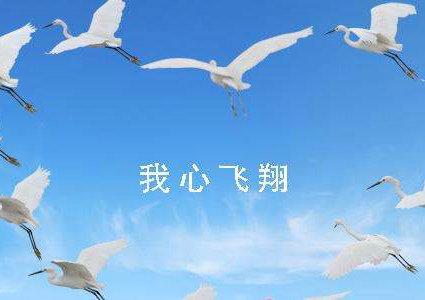 志比天高,力比纸薄,鹤舞白沙,我心飞翔~ 4,看那片闪烁的星空,在那