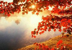 秋天到了句子图片