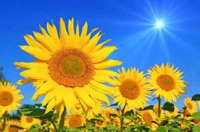 充满阳光正能量的句子