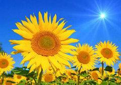 充满阳光正能量的句子:勇敢地生