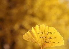 有一种思念的句子:指尖的爱,这
