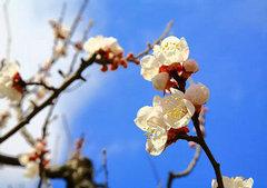桃花开放的句子及图片