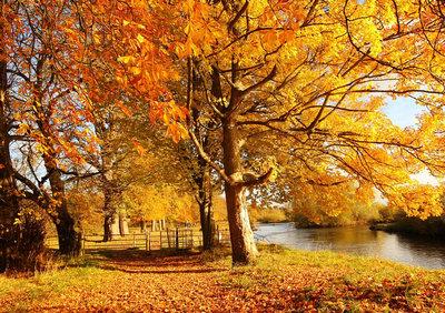 描写秋天的句子景色