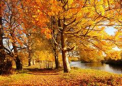 描写秋天的句子景色【精选16句】