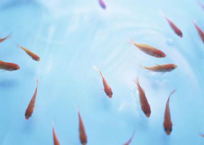 形容水和鱼的句子
