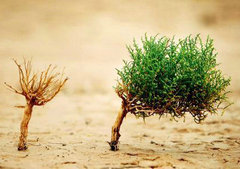 生活看不到希望的句子说说及图片