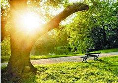 生活充满阳光的句子及图片