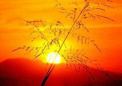 日出日落的句子