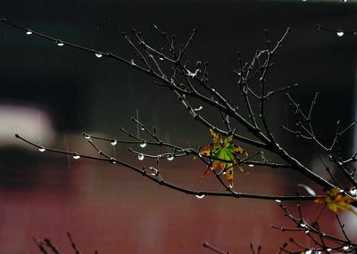 关于秋雨的唯美句子大全