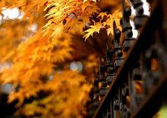 关于秋天的唯美句子:秋天是画,