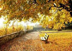 关于秋天的句子摘抄:秋风吹,落
