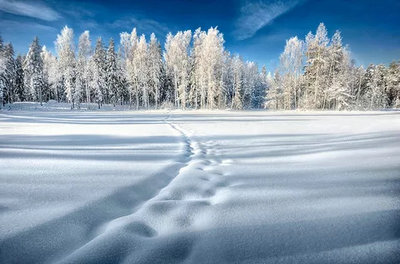 冬天来了写一段话