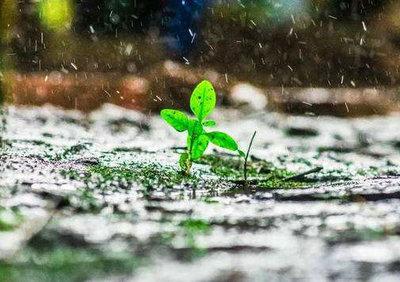 风雨人生路的感言句子