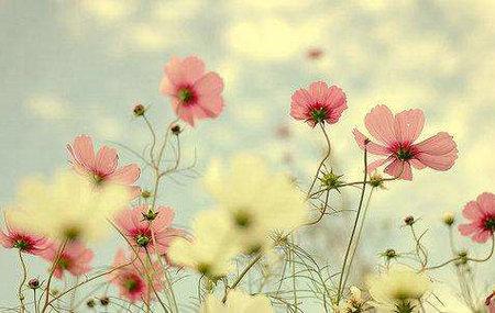 有人爱,有家便有归路,心安便是幸福